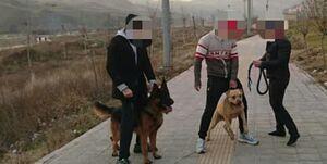 روزگار بیقانونی سگها