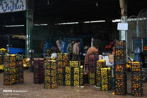 آمادگی میادین میوه و تره بار برای عرضه میوه نوروز