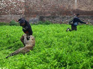 عکس/ حمله هولناک پلنگ به مردم یک شهر