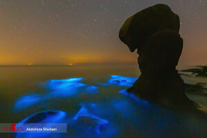 عکس/ درخشش پلانکتونها در خلیج فارس