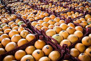دلیل گران شدن قیمت پرتقال چیست؟