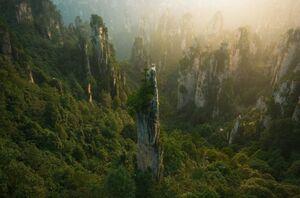 عکس/ برجهای جنگلی