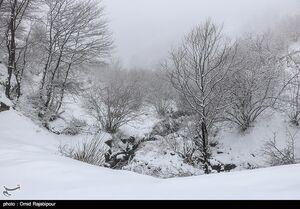 عکس/ بارش برف در گیلان