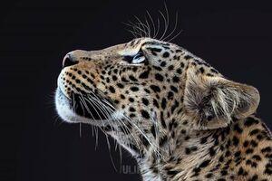 عکس/ رخ زیبای شکارچی