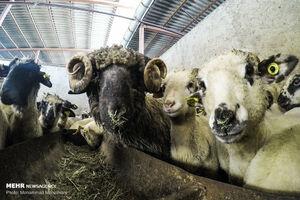 مصرف گوشت یک میلیون تن؛ قاچاق 10 هزار تن