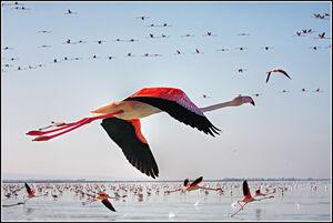 بهشت پرندگان مهاجر