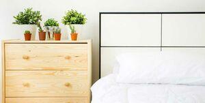 ۱۰ گیاه آپارتمانی برای خواب راحت