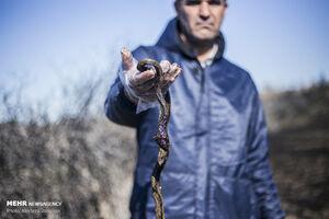 عکس/ قاتل محیط زیست خوزستان!