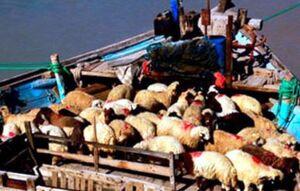 بده بستان جالب گوسفندی! +عکس