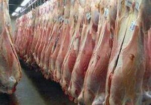 فیلم/ 815 کانتینر گوشت برزیلی در انتظار ترخیص