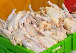 افزایش توزیع مرغ برای تنظیم بازار