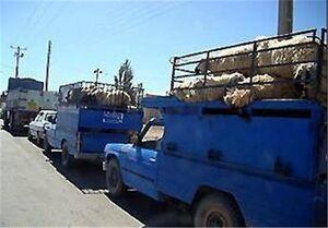 جلسه فوری دولت برای کنترل قاچاق دام