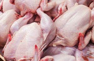 روند کاهشی قیمت مرغ در بازار