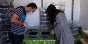 تولید گرانترین مایع جهان توسط جوان ایرانی+ عکس