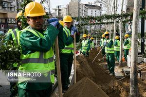 عکس/ احیای درختان چنار خیابان ولیعصر