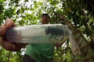 عکس/ بزرگترین زنبور جهان