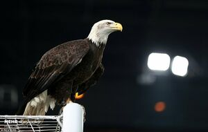 عکس/ نشستن عقاب روی تیرک دروازه منجستریونایتد!