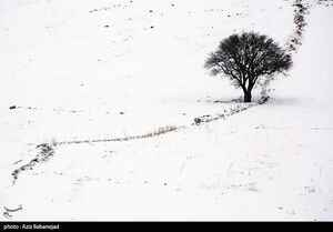 عکس/ بارش برف در خرم آباد