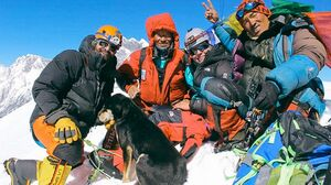 عکس/ صعود یک سگ به قله 7000 متری!