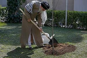 درختکاری رهبری و انقلابی گری ما