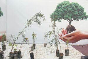 اهدا ۳۰ هزار نهال به مناسبت روز درختکاری در اهواز