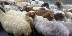 چند گوسفند در ایران داریم؟