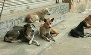 فیلم/ حمله سگهای ولگرد به یک خانم در لواسان