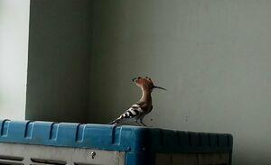 تصویری دیدنی از پرندهای زیبا در زابل