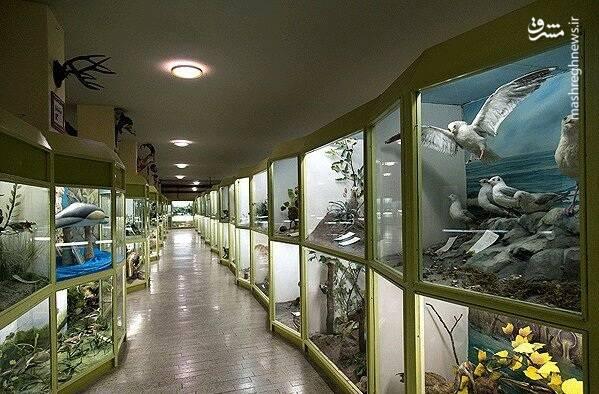 نمایی زیبا از موزه تاریخ طبیعی همدان .