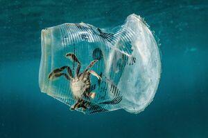 عکس/ عاقبت زباله ریختن در طبیعت