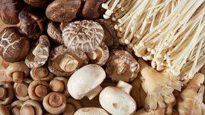 مغزی جوان و سالم با قارچ/ رژیم غذایی که شما را از آلزایمر دور میکند