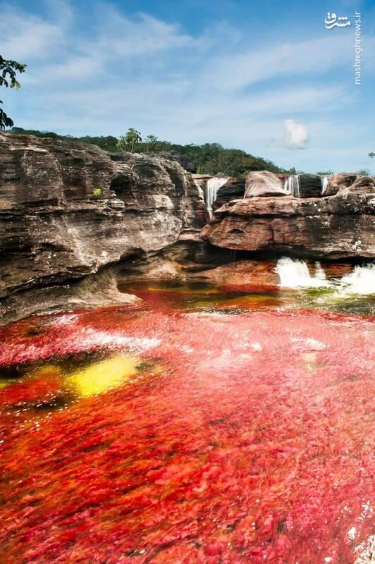 رود «کانیو کریستالس» در کلمبیا