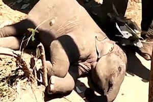 فیلم/ مهر مادری جالب یک فیل به فرزندش