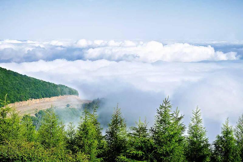 نمایی بسیار زیبا از جنگل ابر