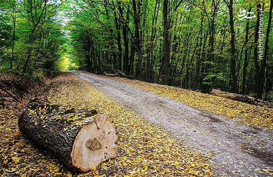 """جنگل """"دشت شاد"""" در 180 کیلومتری شمال شرق شاهرود واقع شده است، تنوع گونه های جنگلی، طبیعت و چشم انداز زیبا از ویژگیهای این منطقه به شمار می رود."""