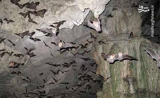 نمایی زیبا از غار خفاش دهلُران ایلام.