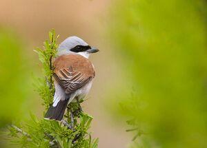 عکس/ پرندهای زیبا در کردستان