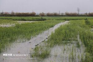 سیل به بخش کشاورزی گلستان چقدر خسارت زد؟