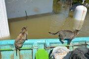 عکس/ نجات حیوانات گرفتار سیل در آققلا
