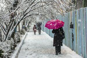 عکس/ بارش برف بهاری در اراک