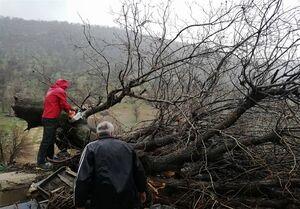 سقوط درخت تنومند بلوط بر روی خانه روستایی +عکس