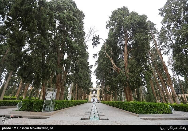 مهمترین گیاهان باغ فین، شامل ۵۷۹ اصله درخت سرو و ۱۱ اصله درخت چنار است.