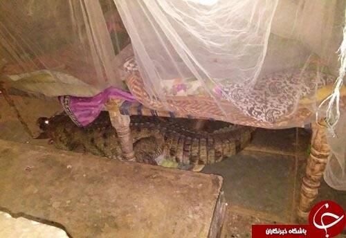 هیولای واقعی زیر تخت خواب+تصاویر