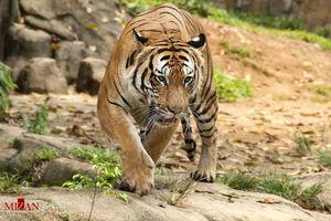 عکس/ حیوانات در حال انقراض