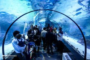 عکس/ تونل آکواریوم دیدنی در اصفهان
