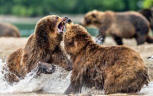 عکس/ دعوای شکارچیها