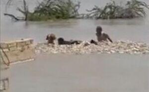 فیلم/ نجات سگ گرفتار در سیل پس از ۳ روز