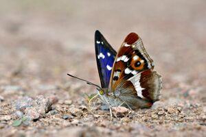 پروانهها، مهمان پایتخت شدند