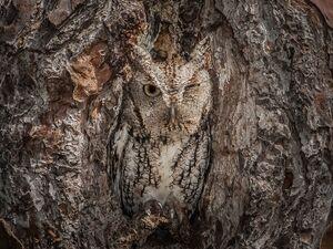 عکس/ استتارهای دیدنی در حیات وحش