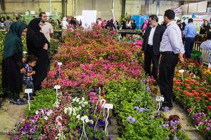 نکات مهم و ضروری درباره خرید گل و گیاه